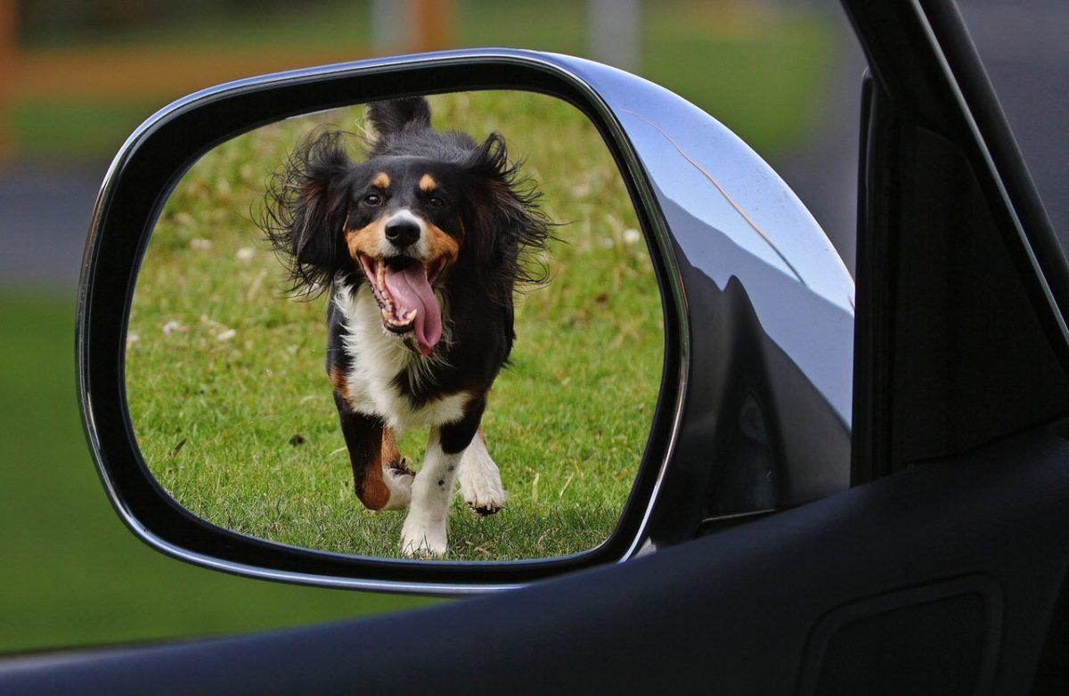 Hund i bil – våra bästa tips! | MyMoney