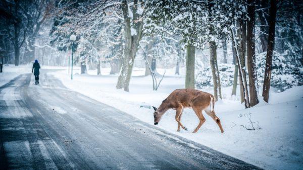 Vinterrusta bilen – var beredd på allt i vinter!   MyMoney