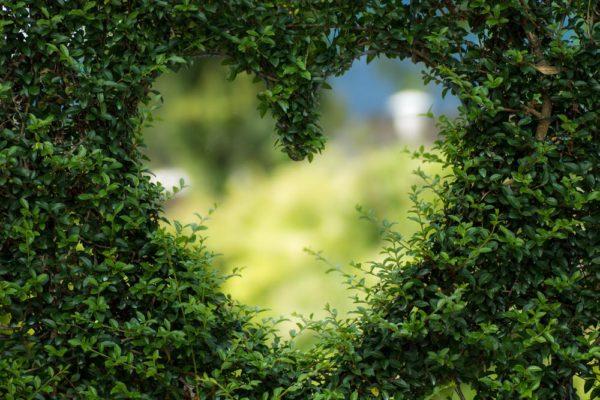 eco driving kör klimatsmart naturen miljön kärlek
